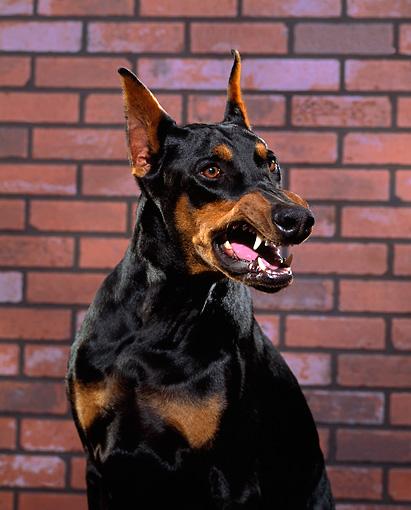 DOG_01_RK0228_01_P